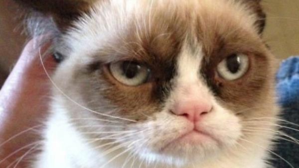 10 gatos que tienen un día peor que el tuyo