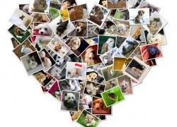 Crea preciosos collages de fotos gratis
