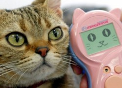 Meowlingual Translator: por fin podrás entender a tu gato