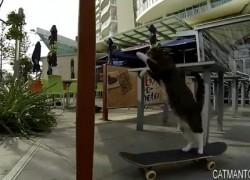 [TGIF] Didga, el gato australiano patinador
