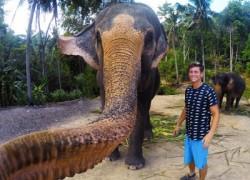 Los elefantes también se hacen selfies
