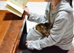 Sudadera con bolsillo incorporado para tu gato