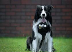 Éste es Grizzler, el perro fotógrafo