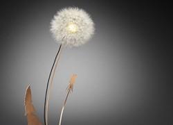 Dandelight: efímera mezcla de lámpara con naturaleza y arte