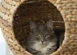 Esfera de relax para tu gato