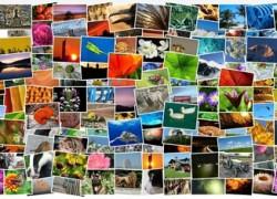 Crea tus mejores collages de fotos con PhotoGrid