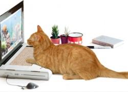 Un portátil de cartón para que lo use tu gato geek