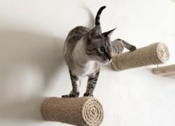 Postes de cuerda flotantes para tu gato
