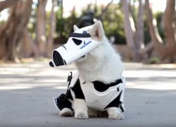 [TGIF] Vídeo de un perro Corgi disfrazado de Stormtrooper