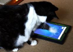 6 gadgets que puedes regalar a tu mascota