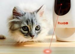 Pawbo: cámara wifi y dispensador de golosinas para mascotas
