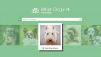 ¿A qué perro te pareces? Averígualo con esta app de Microsoft