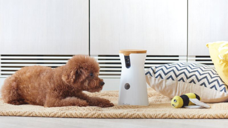 Furbo, la cámara para vigilar a tu perro que le lanza chuches