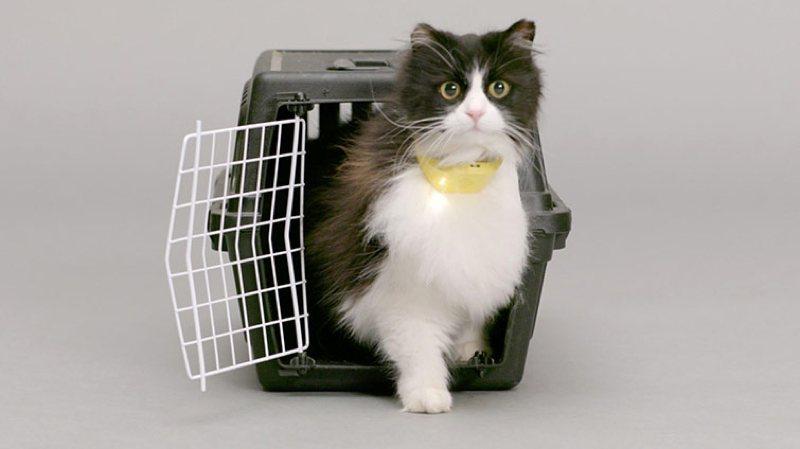 Catterbox: un collar que traduce lo que dice tu gato