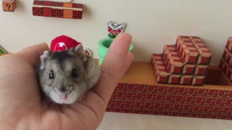 Adorable vídeo de un hámster pasándose el primer nivel del Mario Bros