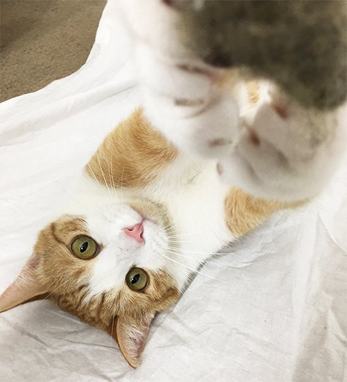 Flexy Paw, el gadget para hacer fotos perfectas a tu mascota